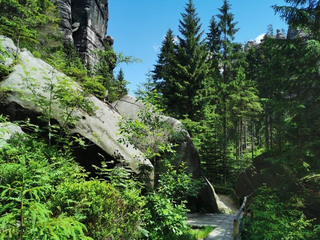 Zieleń Teplickich skał