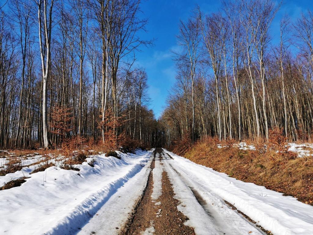 leśna droga zimą idealna na spacery