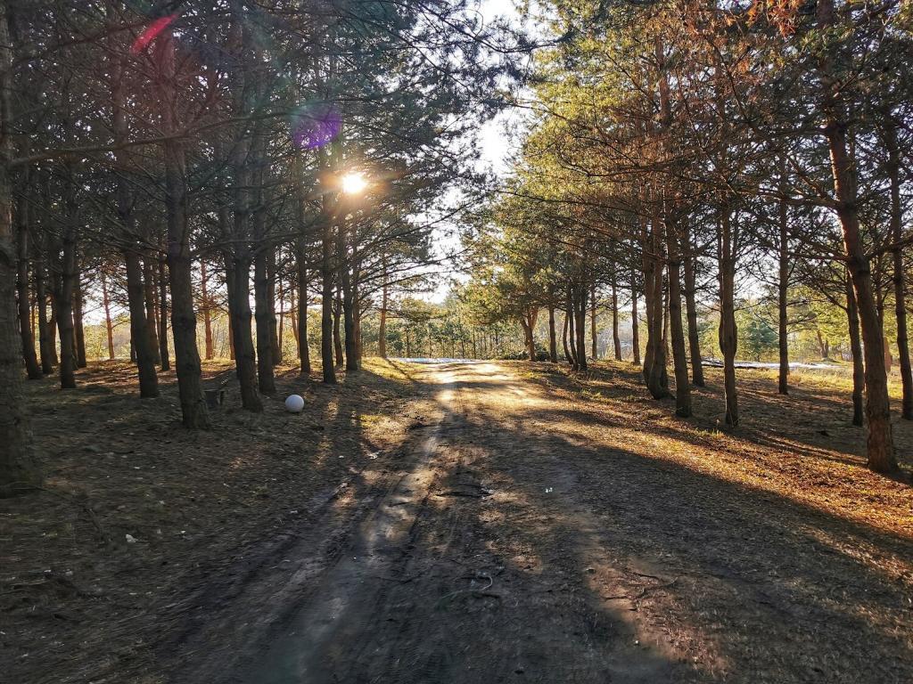 droga w lesie na spacery