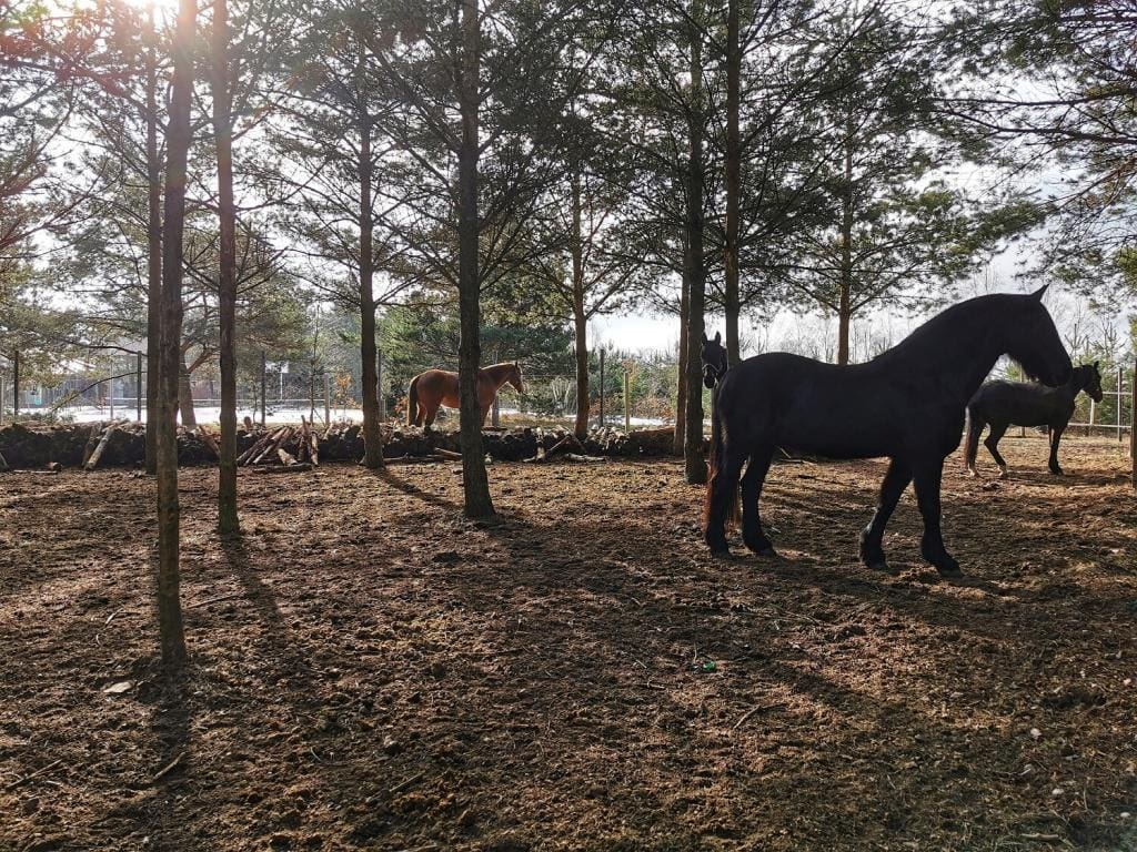 konie w lesie na pastwisku