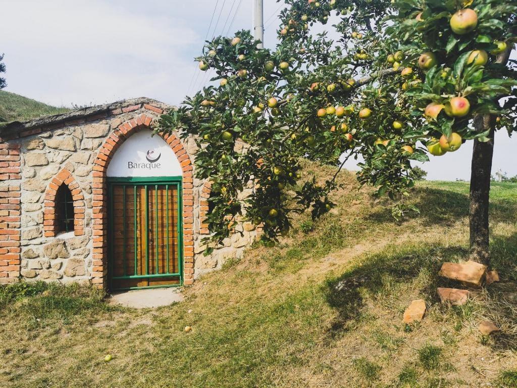 Czeskie Morawy winnica