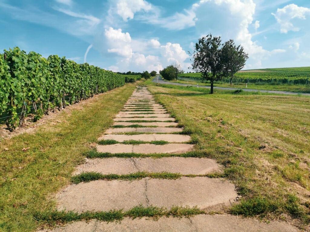 Czeskie Morawy panorama widok